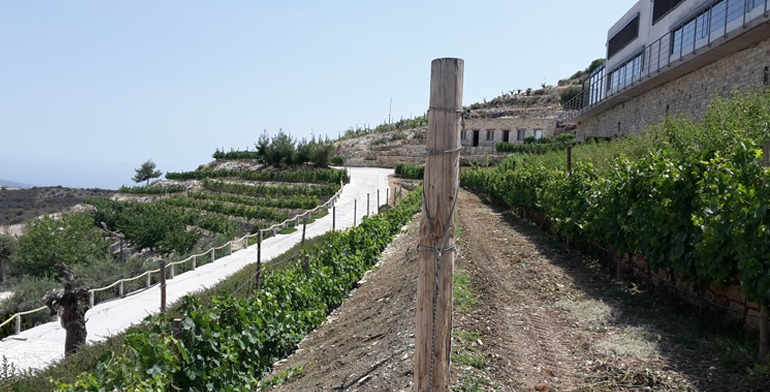 omdmc_wine_cullinary_dafermou_lefkara