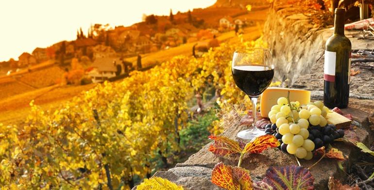 omdmc_wine_cullinary_nemea_wine_cellar
