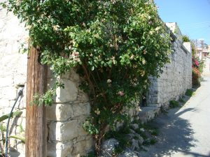 lania-village-cyprus