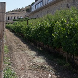 cyprus-incentives-wine-tour