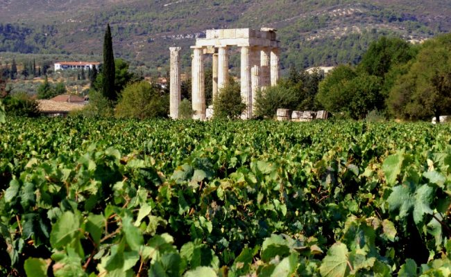 archaia-_nemea_winetasting_events-650x400