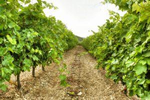 nemea-winetasting