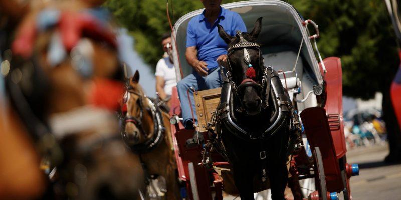 aegina-horse-carriages